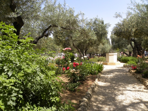 Olive_trees_in_the_traditional_garden_of_Gethsemane_(6409625959).jpg